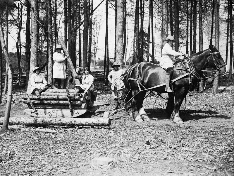 Members of the Women's Forestry Corps in Sussex